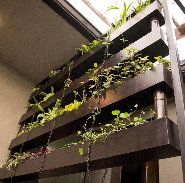 תנאים אופטימליים בדישון הצמחים