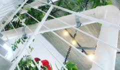 פוטוסינתזה וחשיבות האור בצמחים